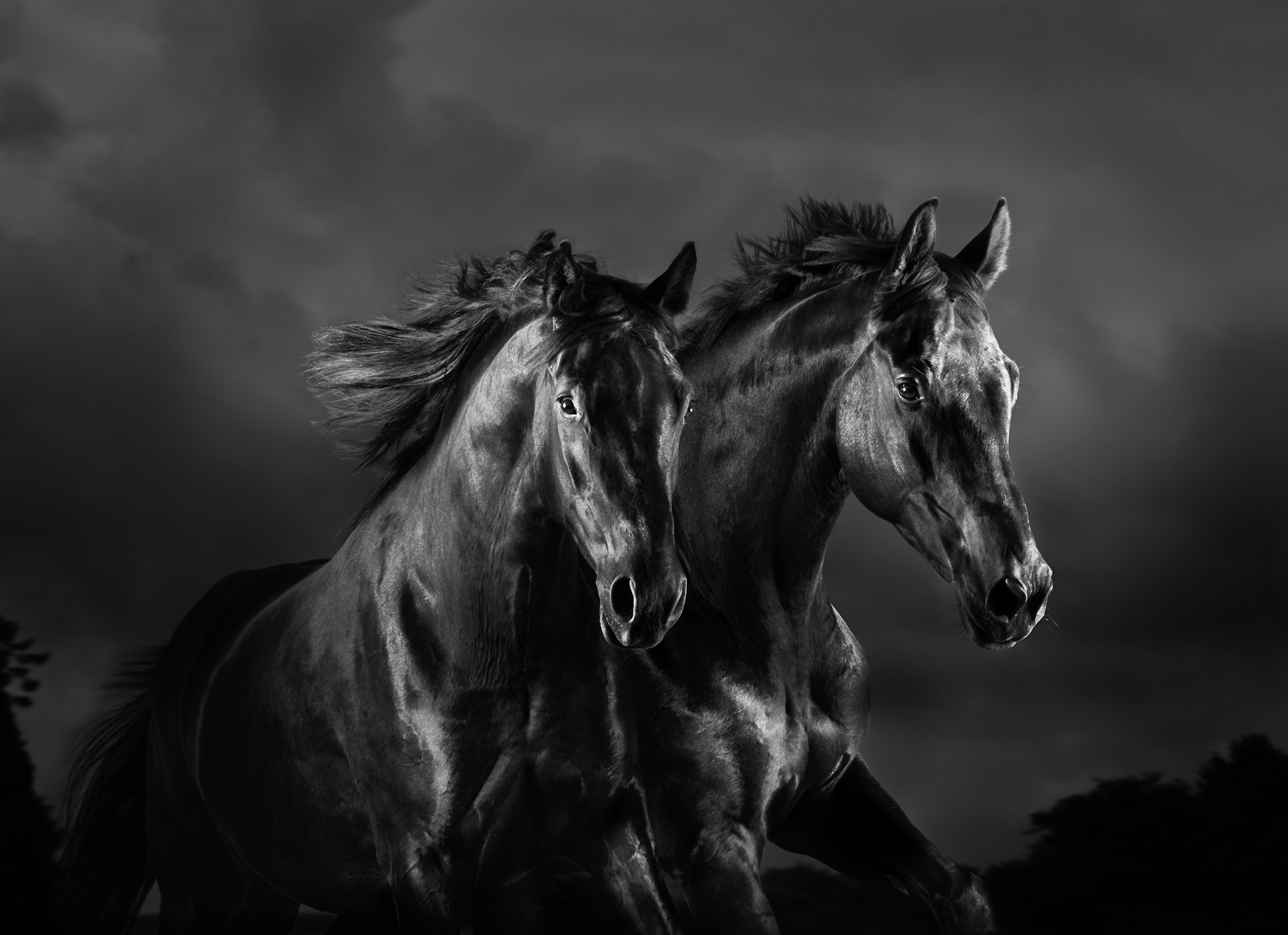 Black-Horses-Mark-Harvey