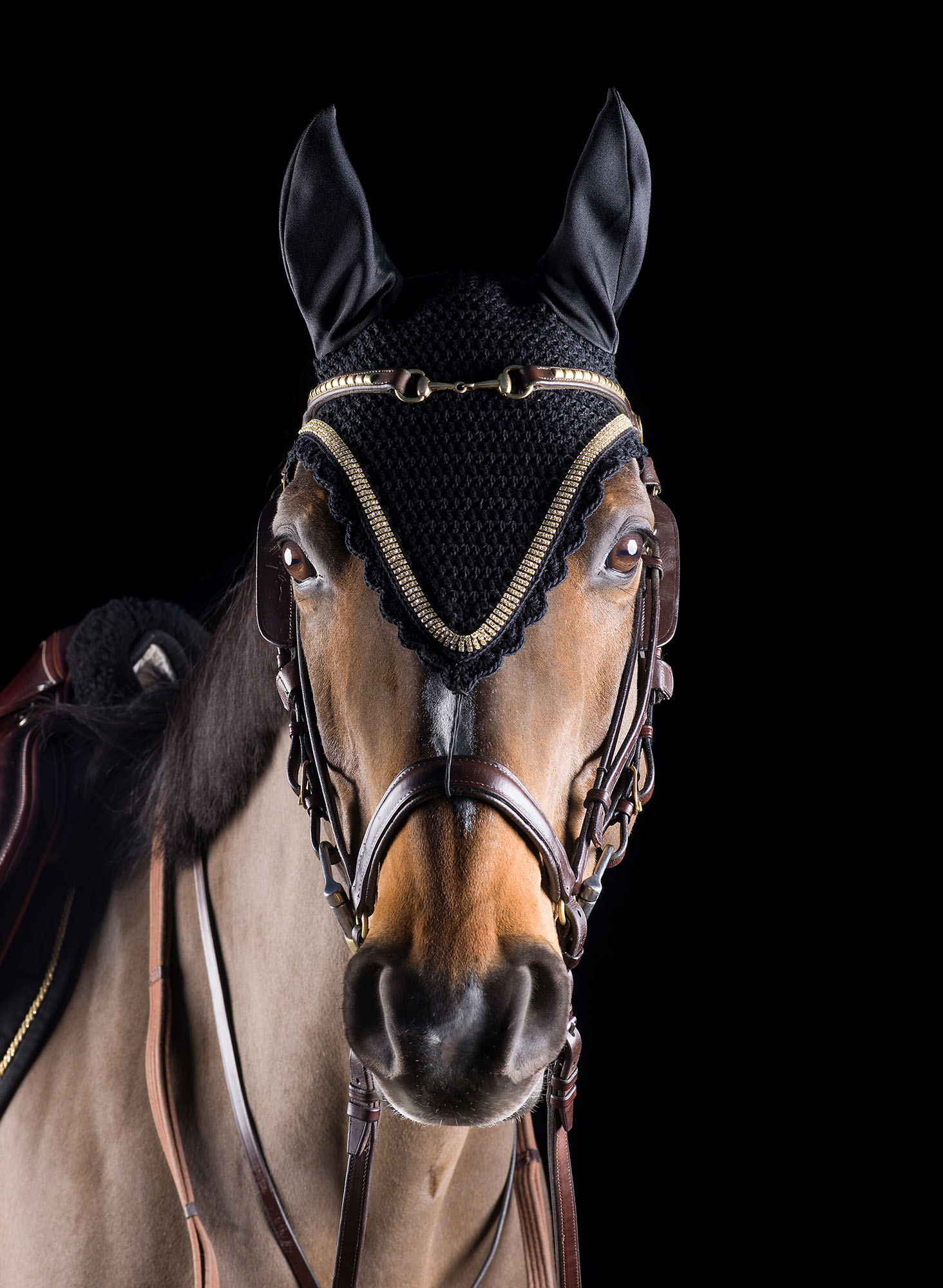 Horse-In-Uniform-Mark-Harvey-Photography