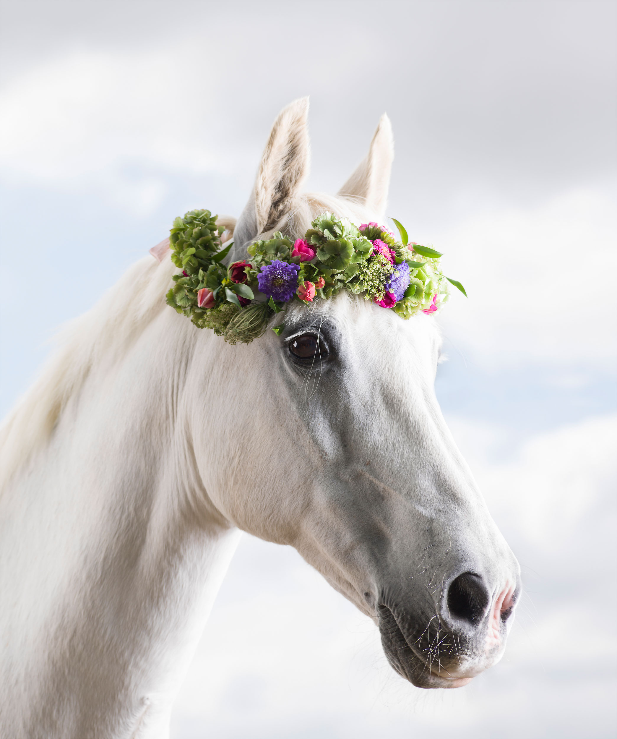 Mark-Harvey-Flower-Horse