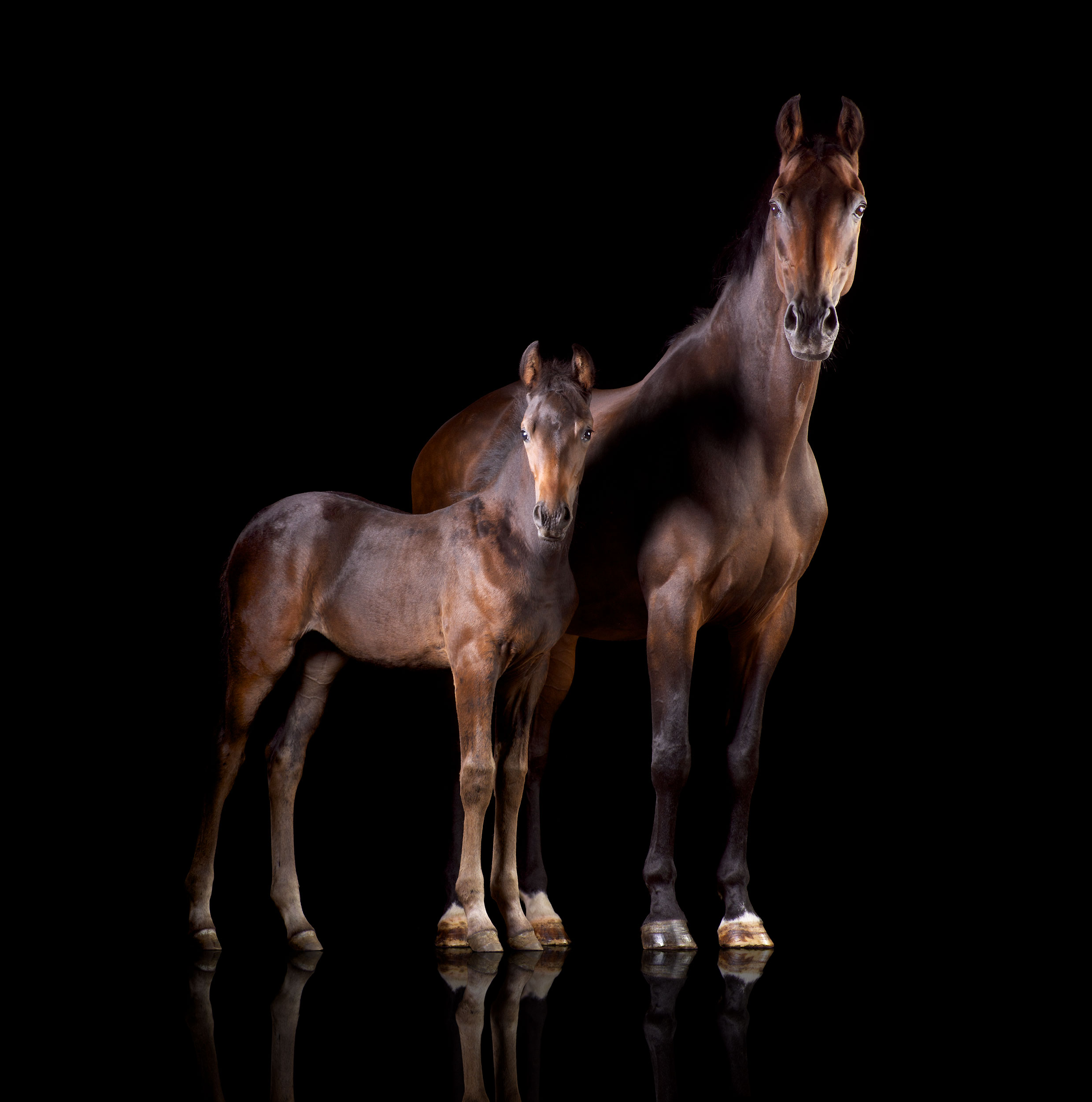 Mark-Harvey-Mare-Foal
