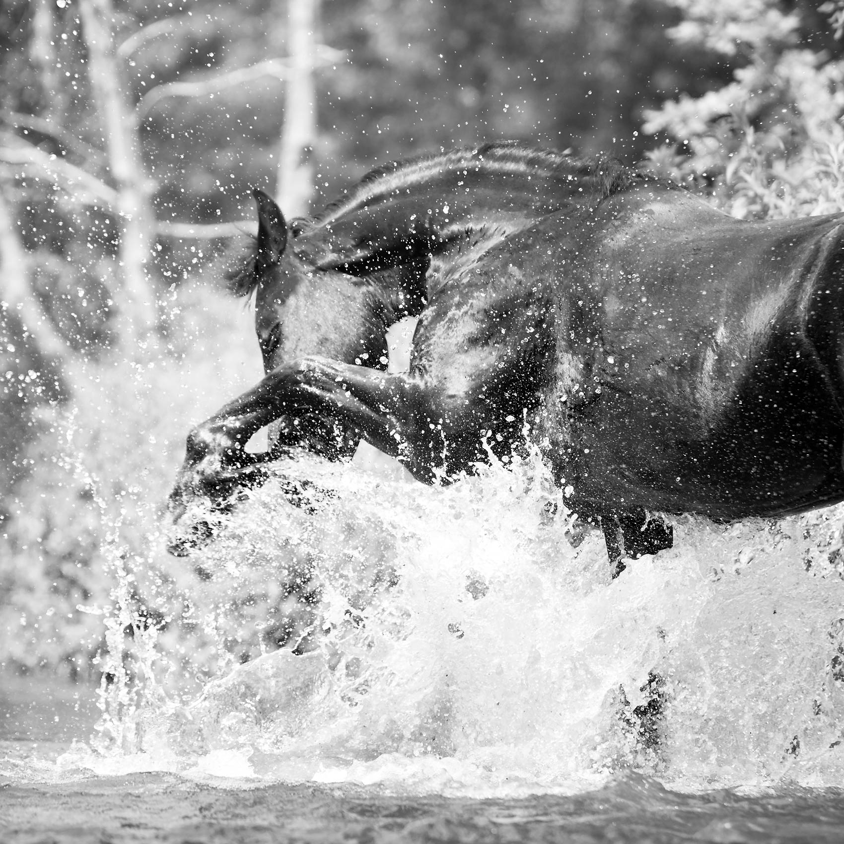 Mark-Harvey_Water-Horse