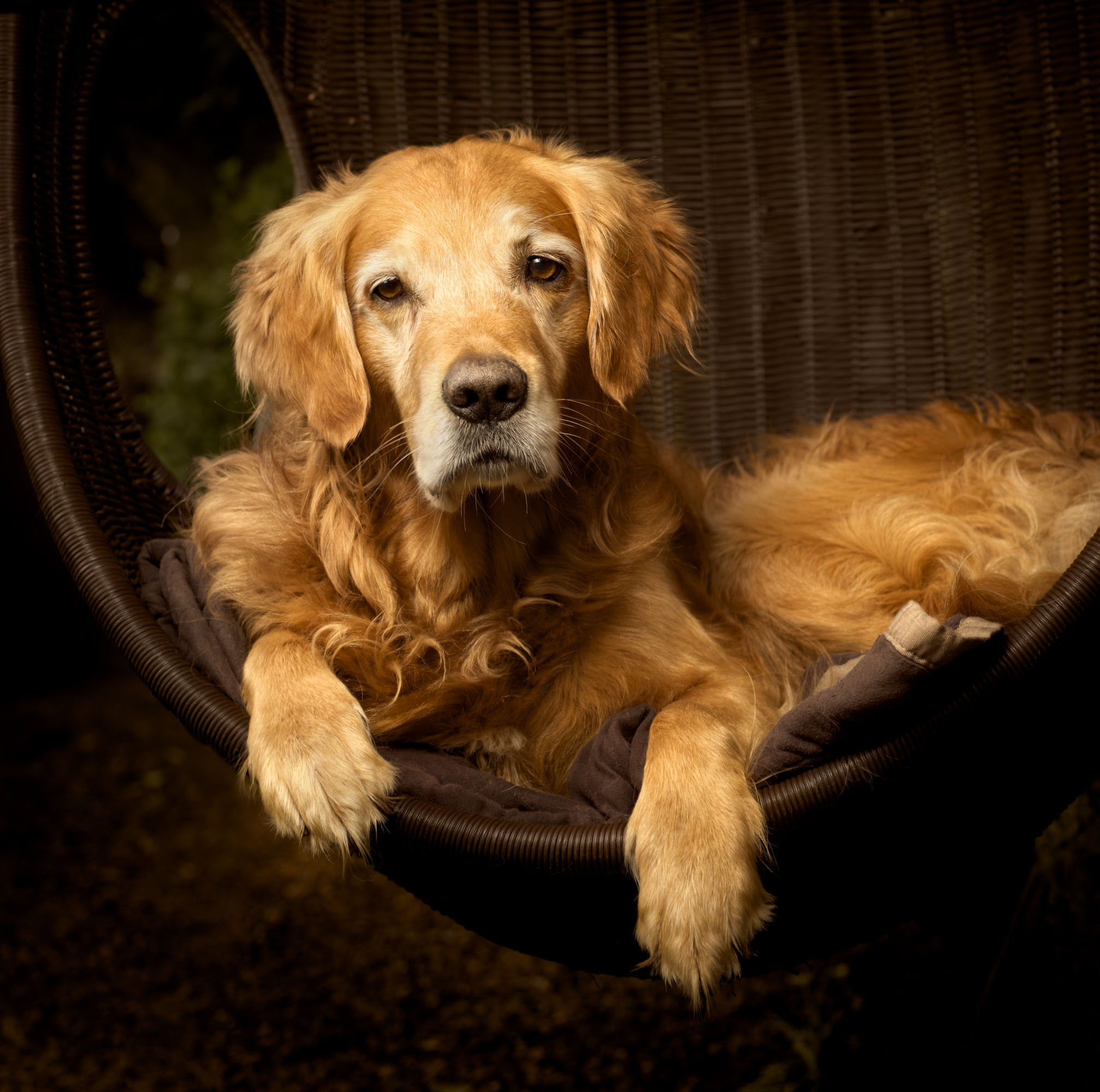 Retriever Basket