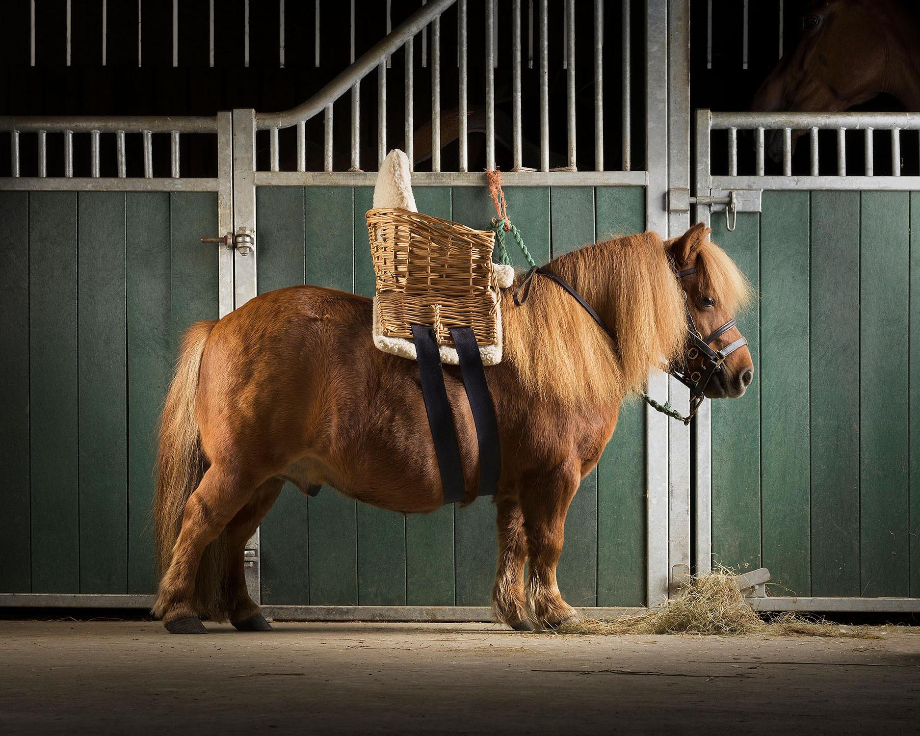 Shetland-Basket-Saddle-Mark-Harvey-Photography