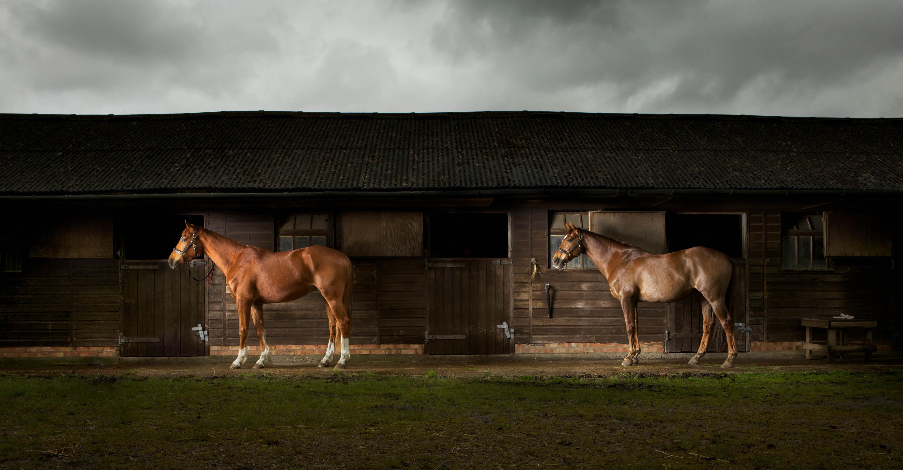Horses by Stables